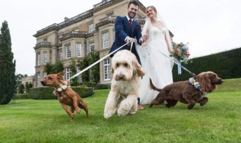 Hedsor House offering couples to include their dog in new luxury wedding package | UK | News