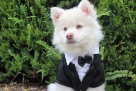 Chicago suburb attempts world record for largest dog wedding ceremony