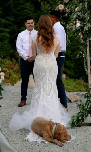 Dog steals show at owners' wedding by taking snooze on bride's train
